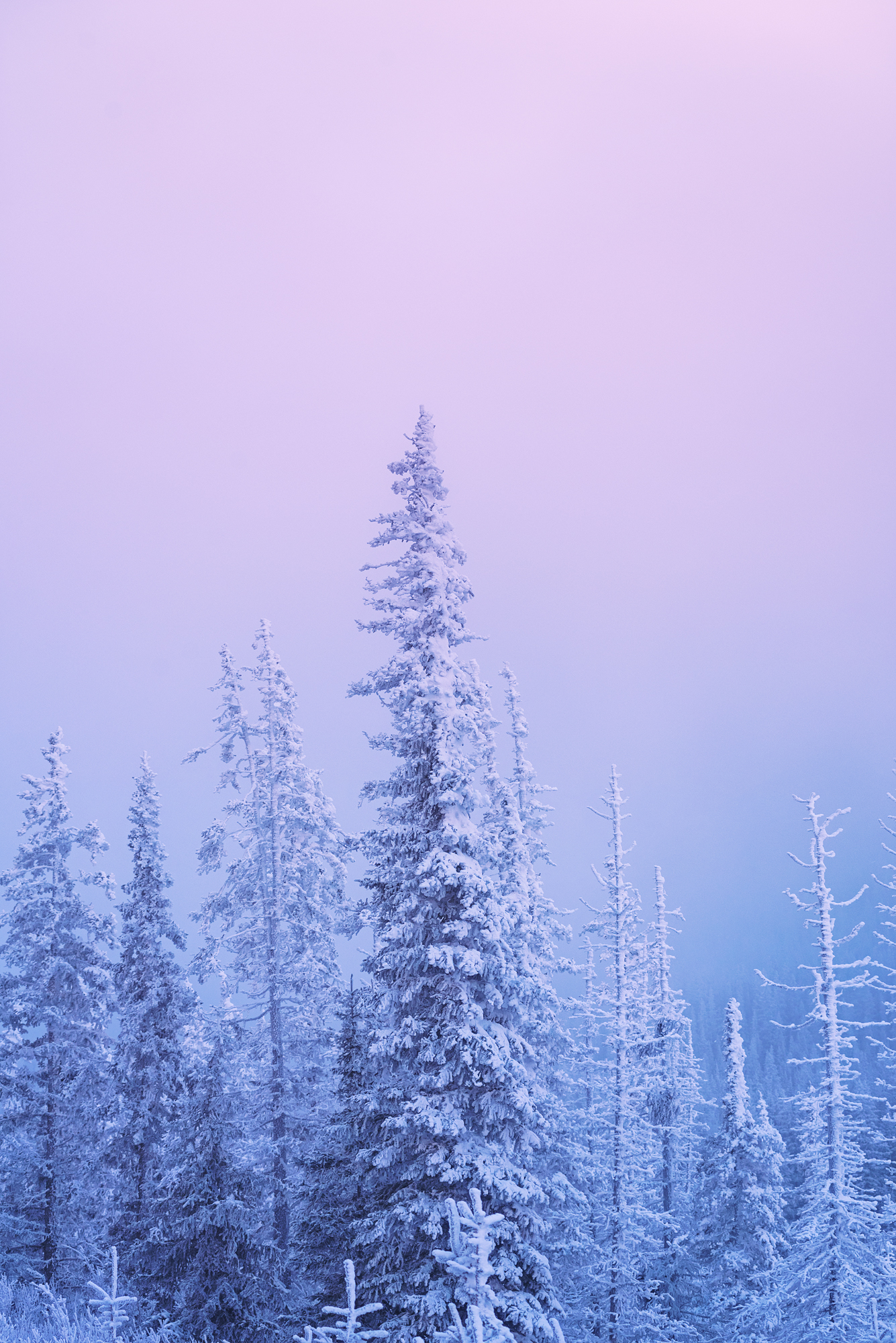 Atmospherics_Frosted_Pastel_Trees_2000px.jpg