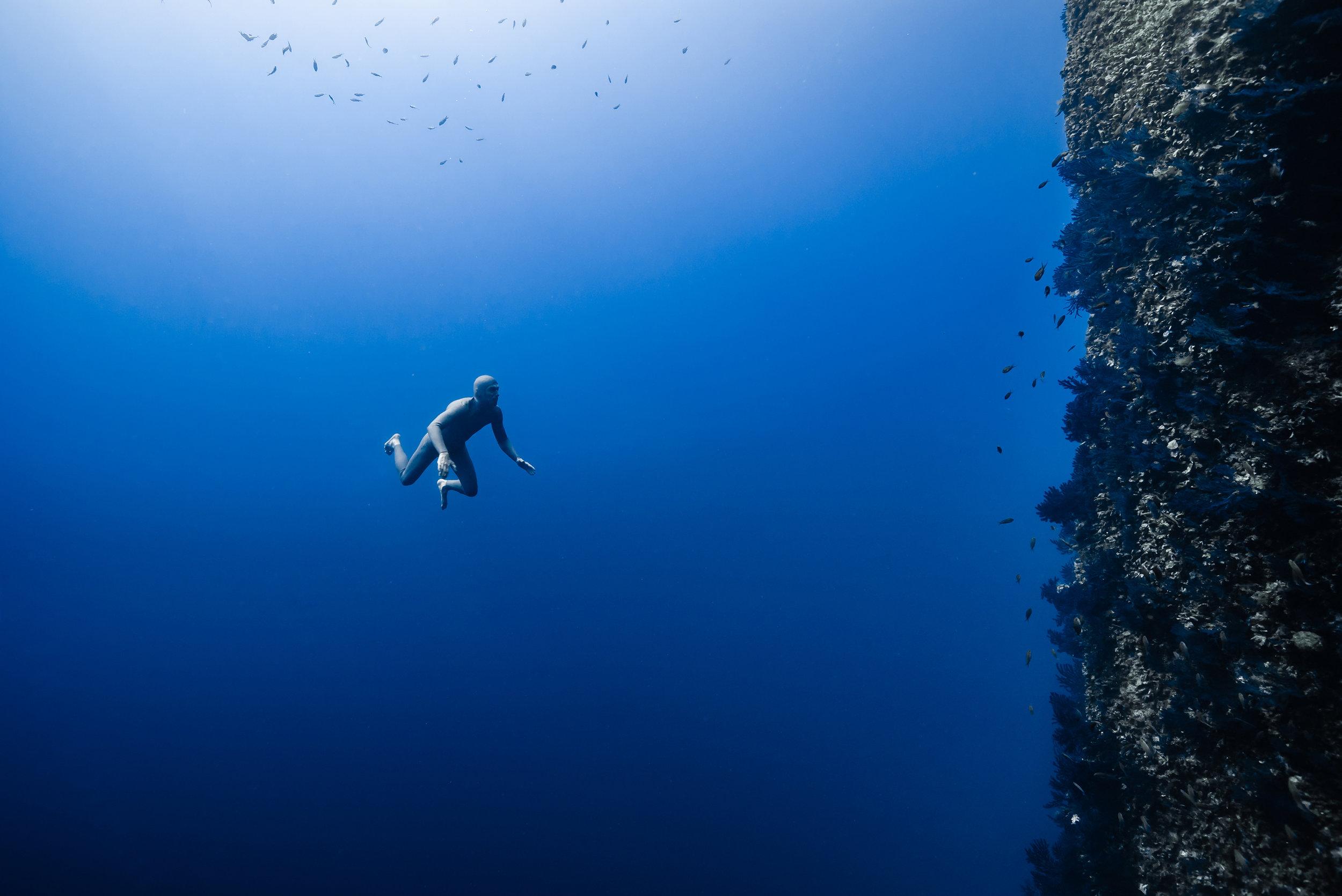 Photo : Jean-Charles Granjon -  Immersion le long du tombant de Caramassaigne, île de Riou