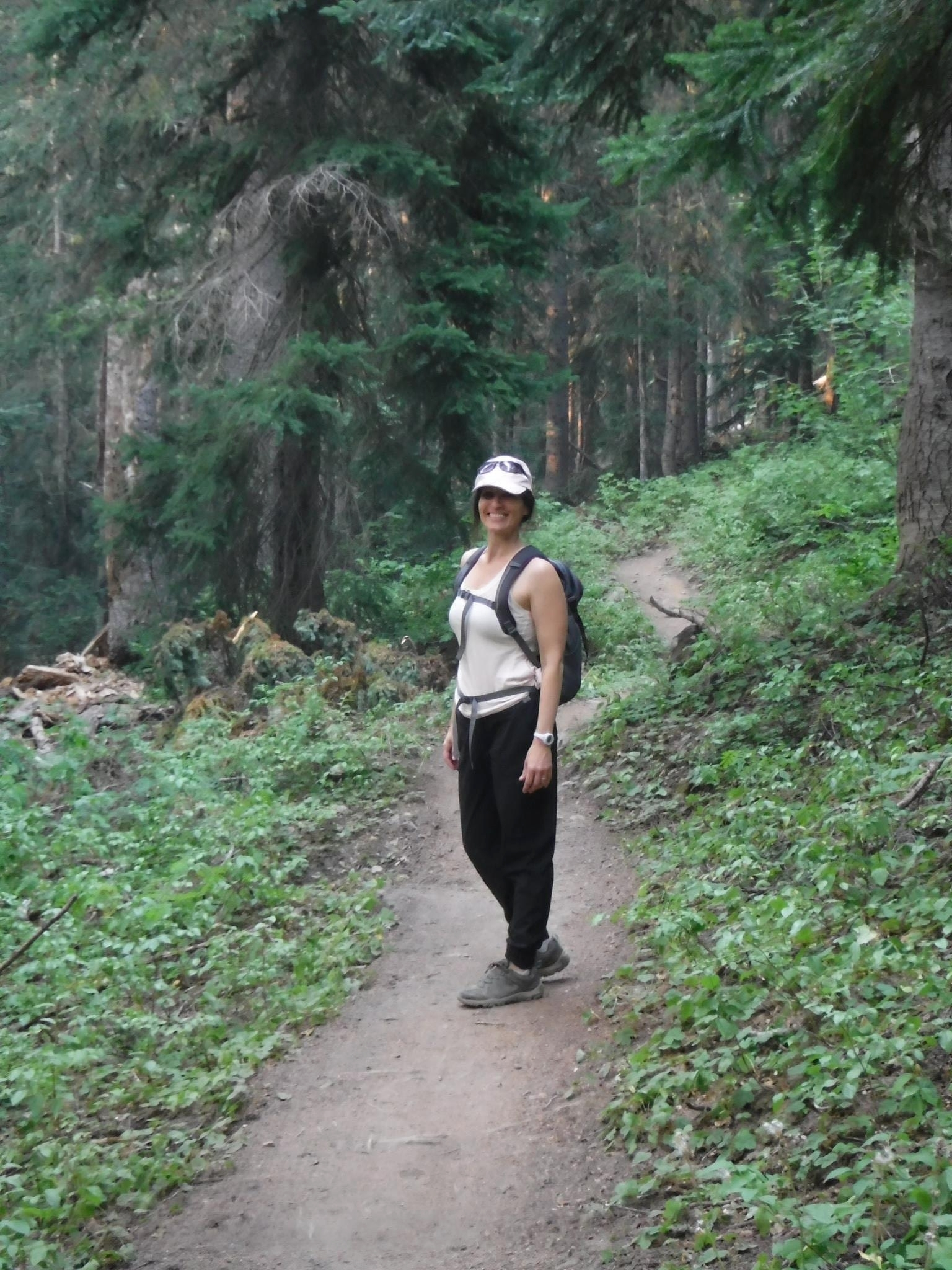 Among the Sitka spruce in North Cascades National Park