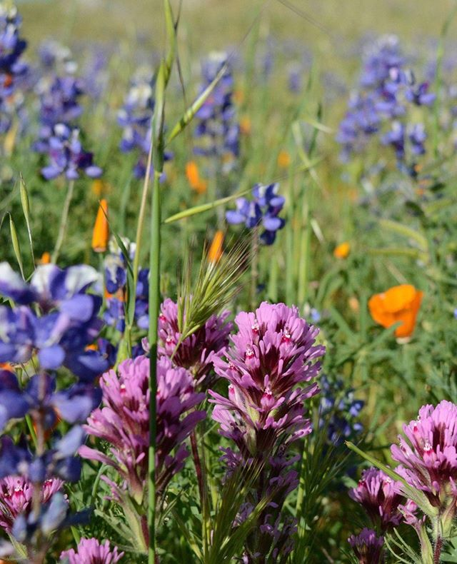 Our greatest resource is not in our buried minerals or our fertile soils; it is in the intellectual capital of our people. Although the green pastures, healthy crops, + beautiful wildflowers help to make this city sustainable, the people in it help it to thrive. . . #beinbakersfield • www.beinbakersfield.com
