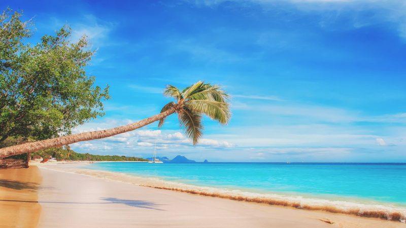 Paradise-800x450.jpg