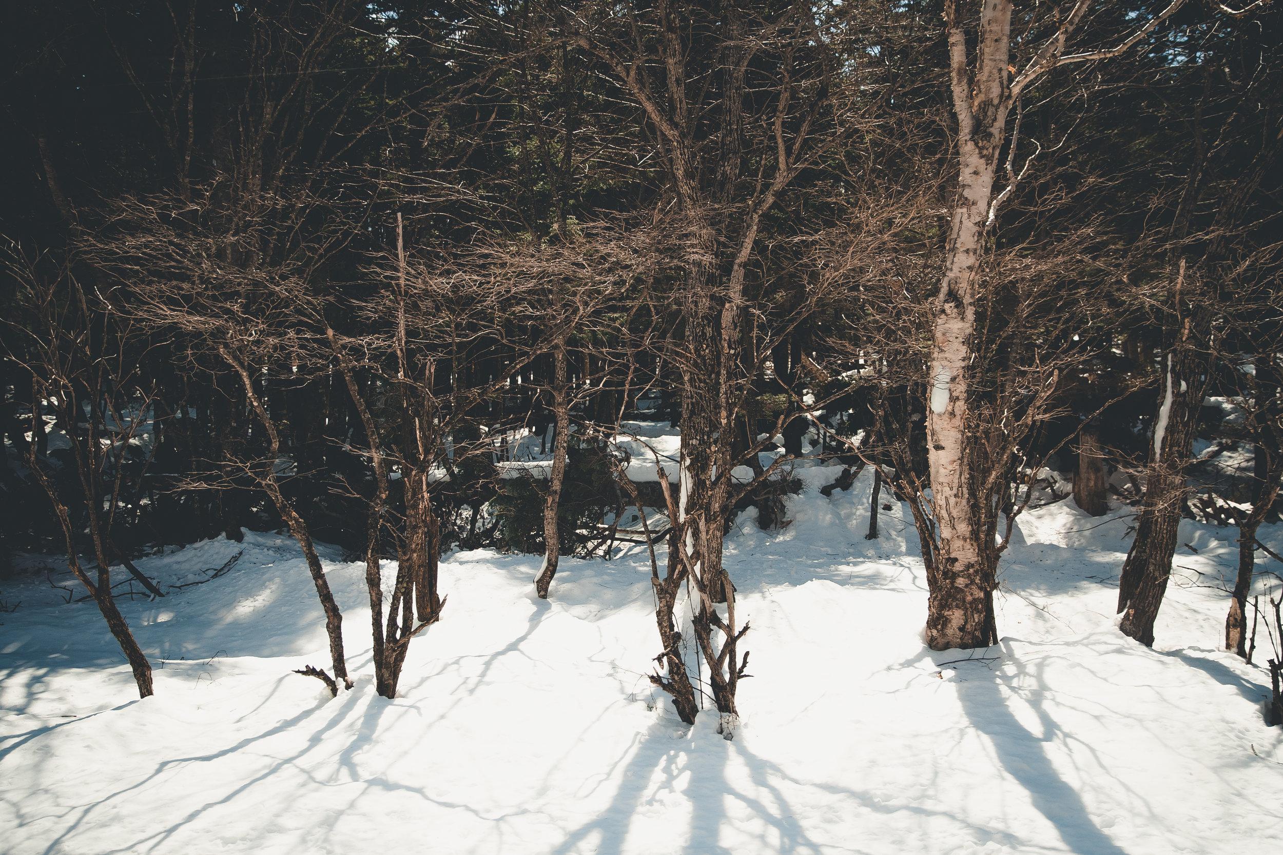 tokyoD3-18.jpg