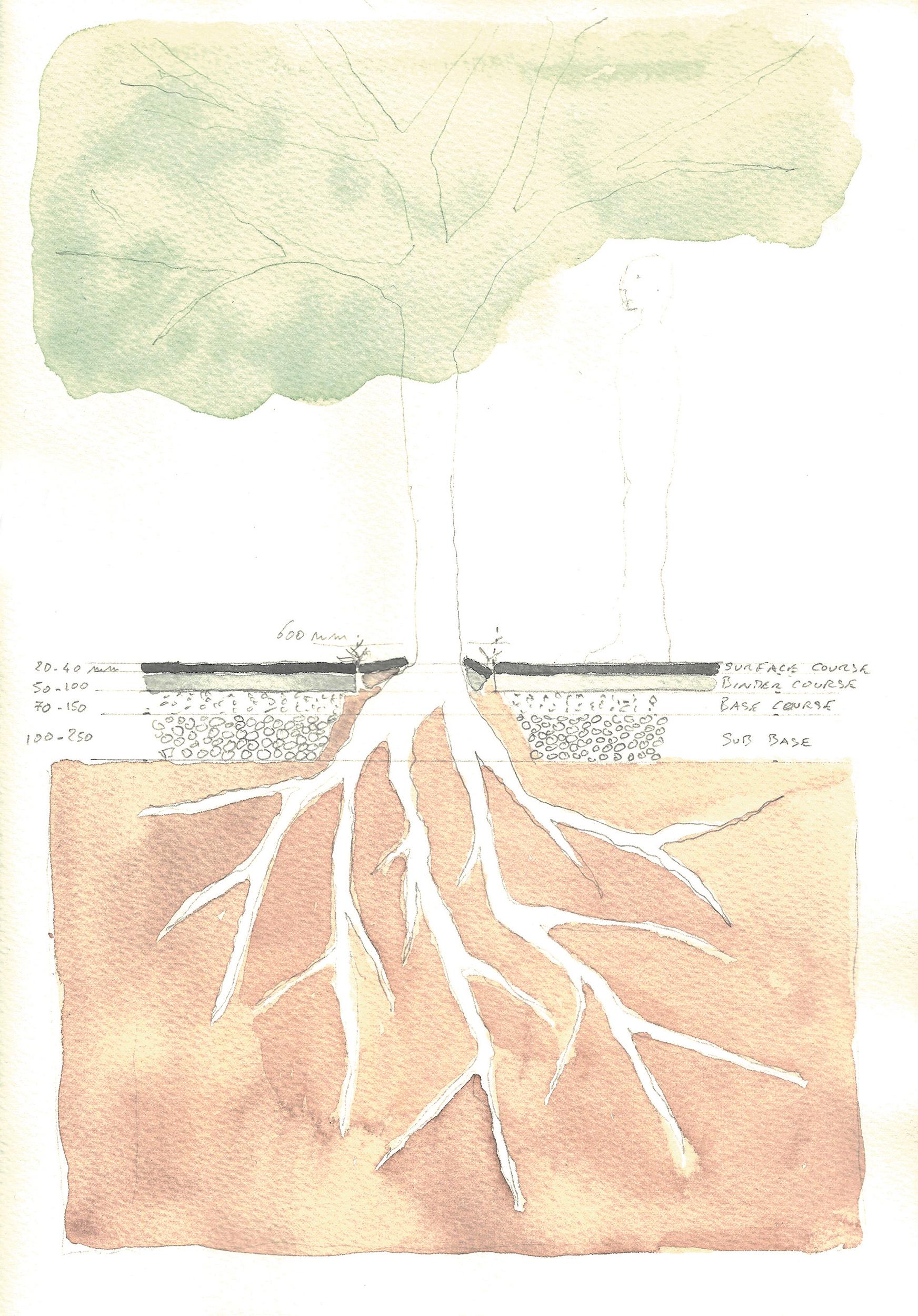 Tree planting detail through existing tarmac