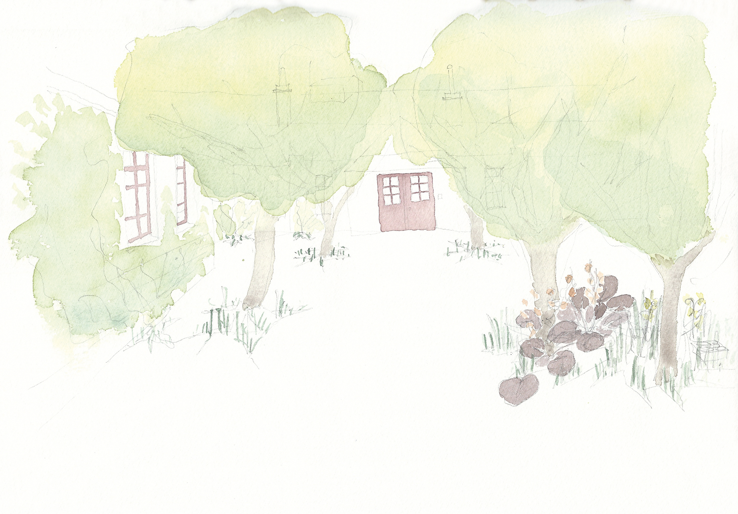 Entrance schoolyard invade by trees and plants