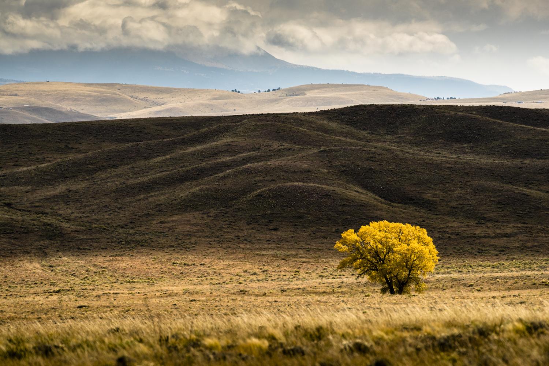 Tree+on+Meadow+Web+sm.jpg