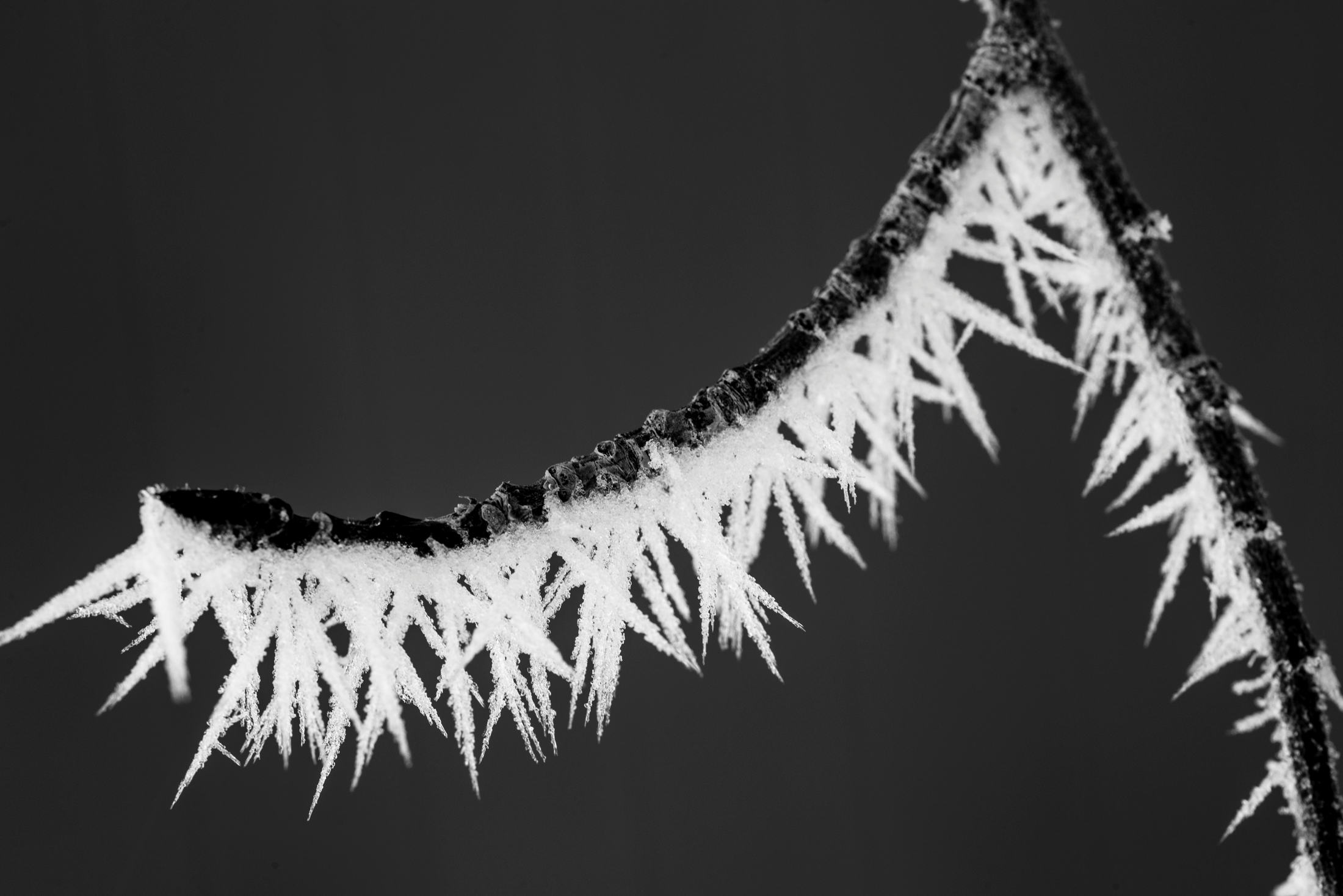 Ice Crystals on Branch 2.jpg