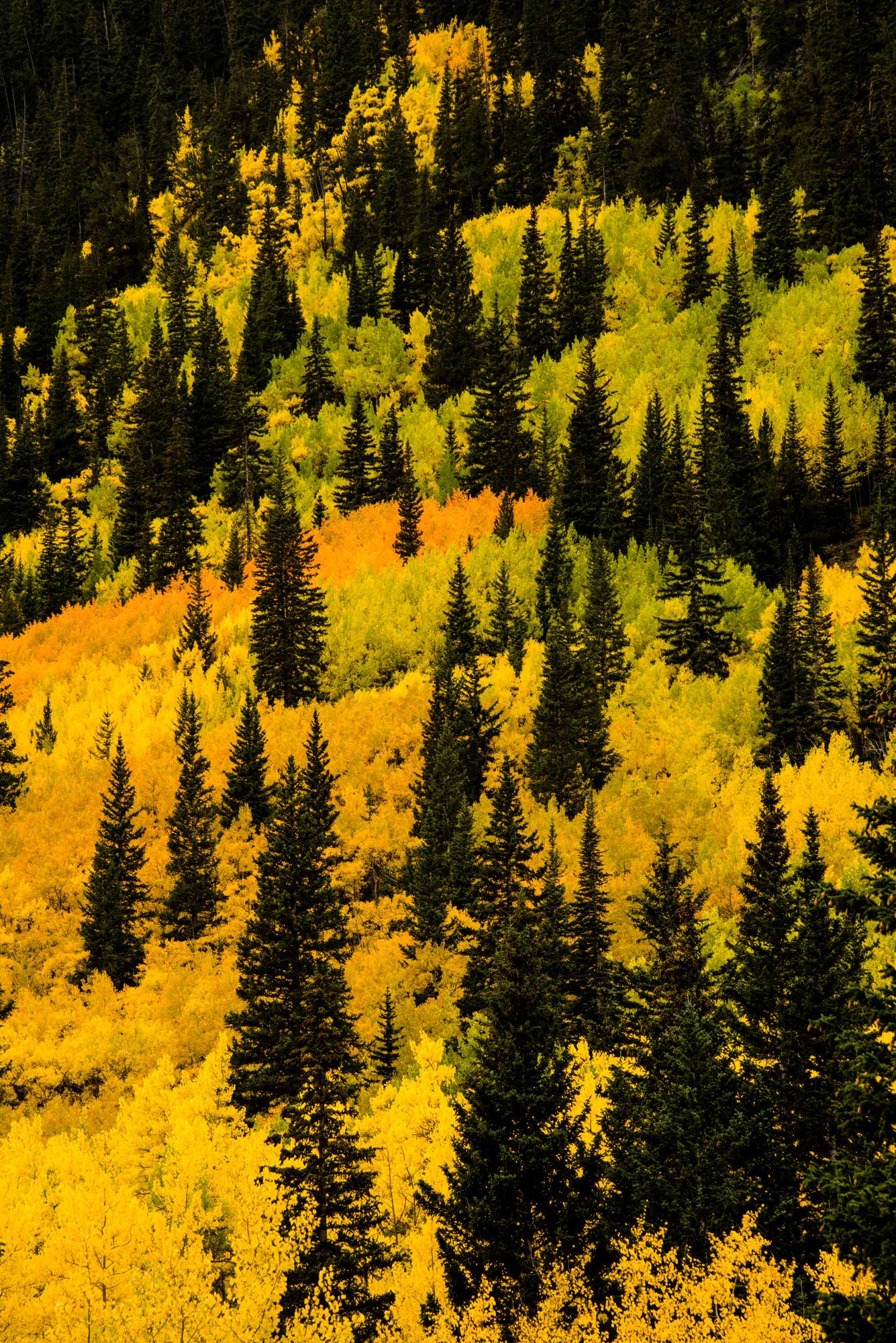 Fall Colors 1 Web.jpg