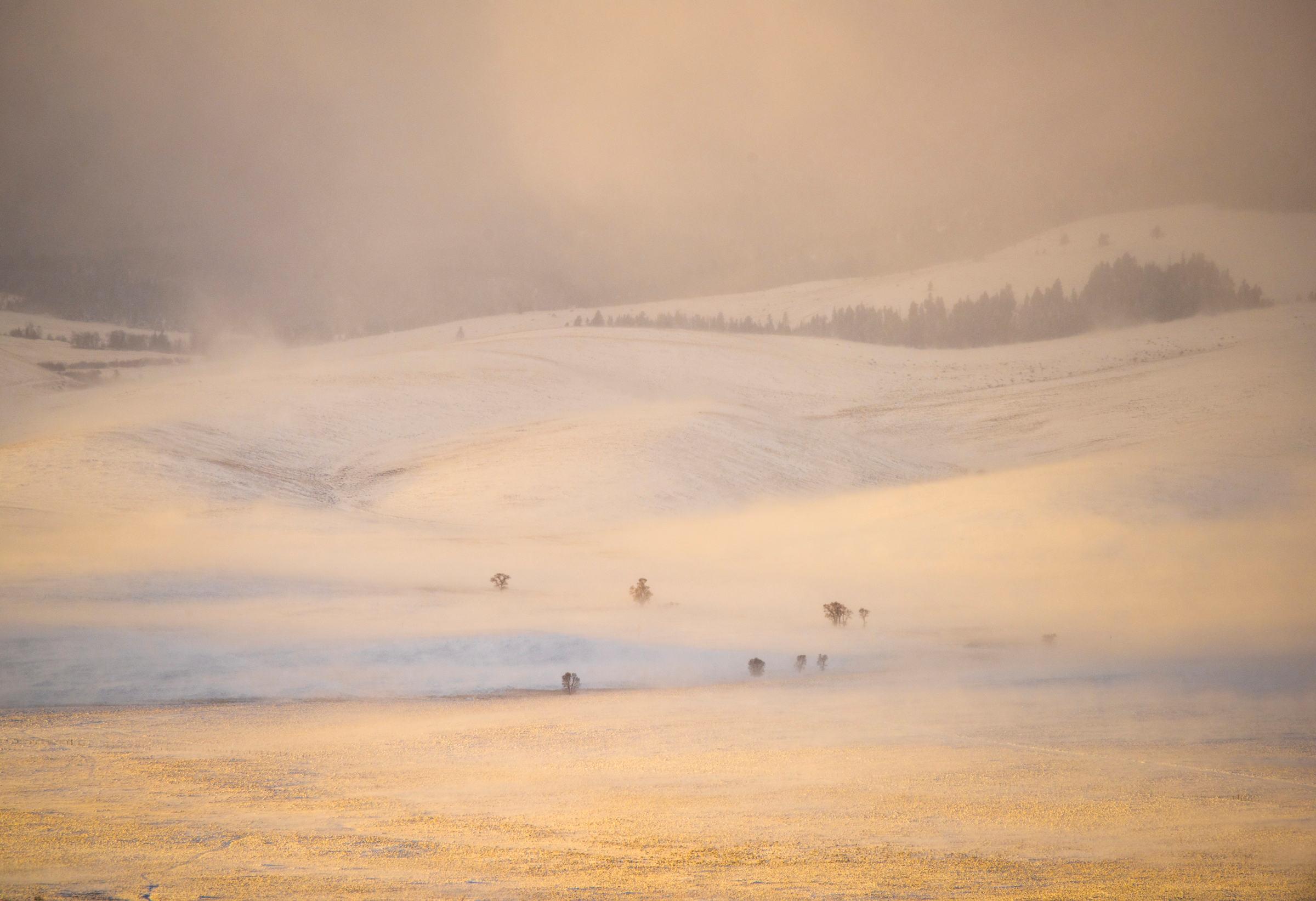 Winter Fields of Gold web.jpg