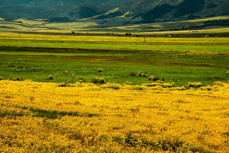 Fields of Gold II