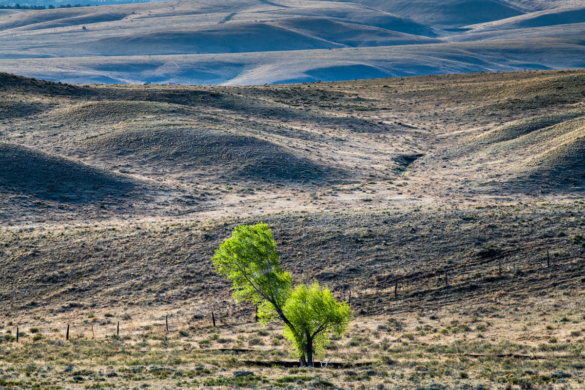Tree in Spring I web.jpg