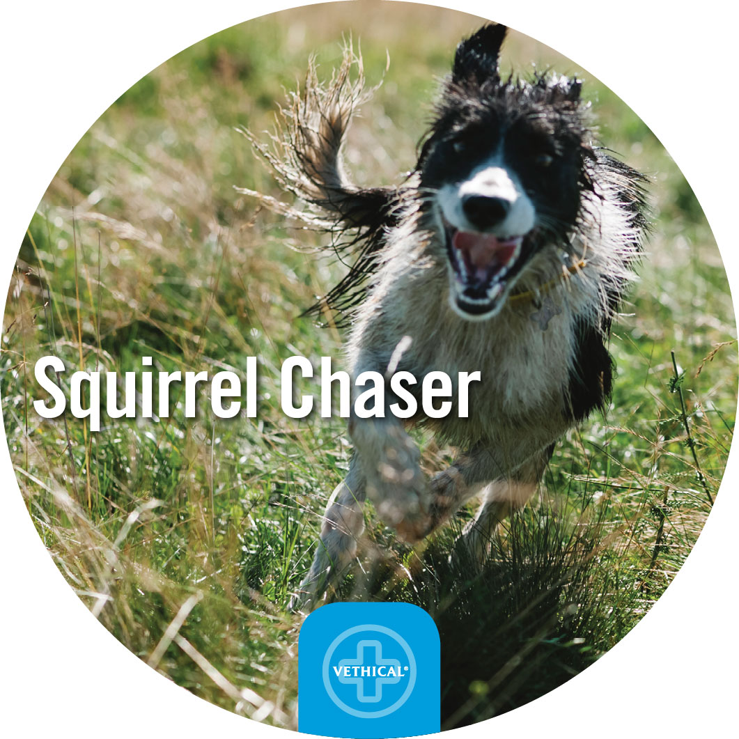 Squirrel-Chaser.jpg