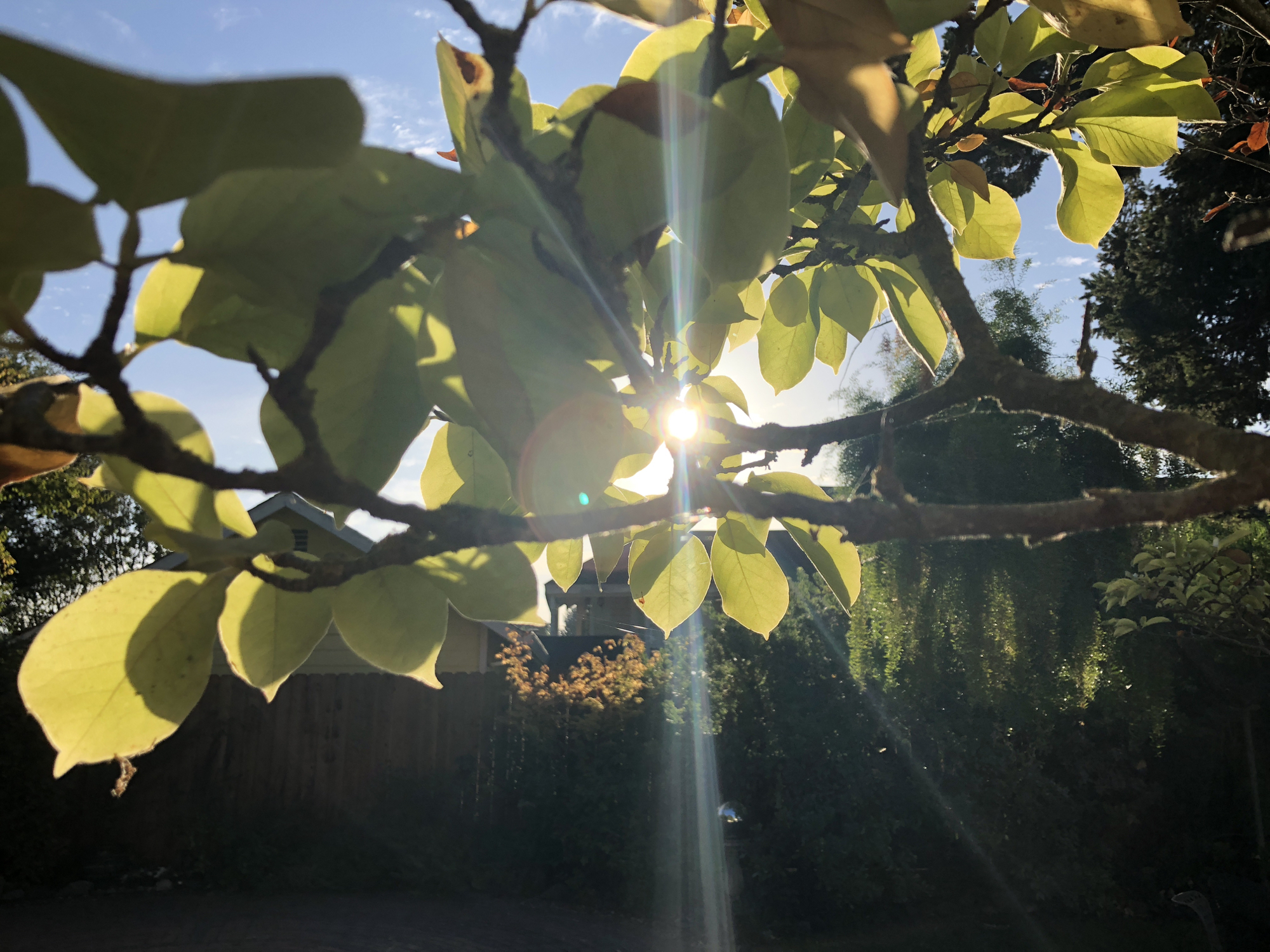 firstmorninglight.jpg