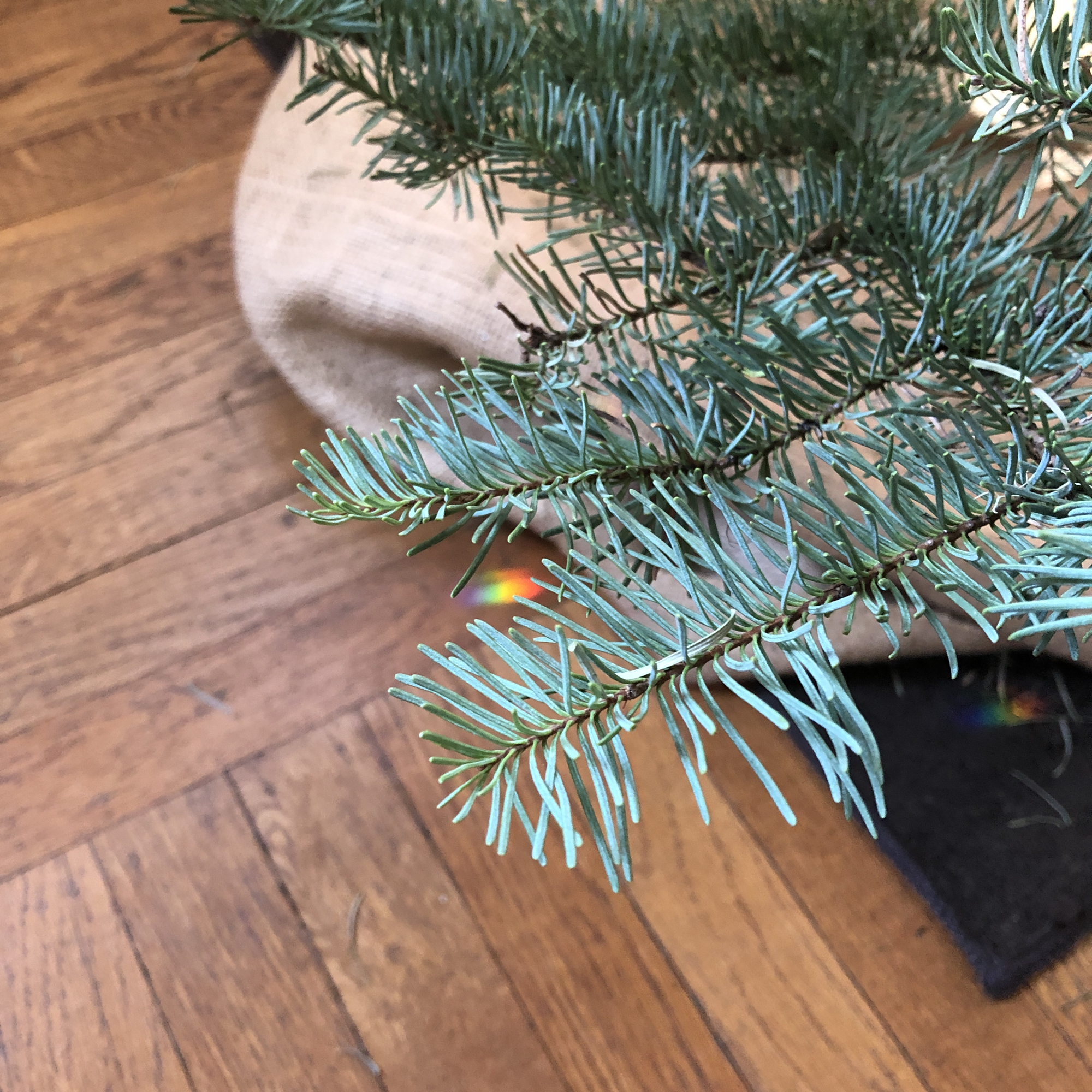 Along with a couple of unicorns, unexpected rainbows found beneath my Christmas Tree