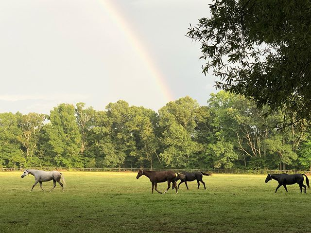 #poloponies arrive just in time for the evening rainbow. #luckypoloponies #polo #poloponies #polovacation #ponyvacation