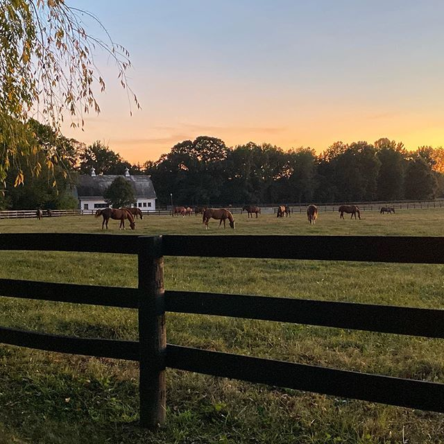 Cool evening grazing #iphone11pro @powhatanplantation