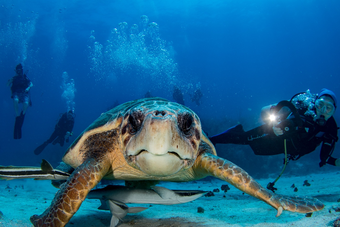 SCUBA Diving Package -