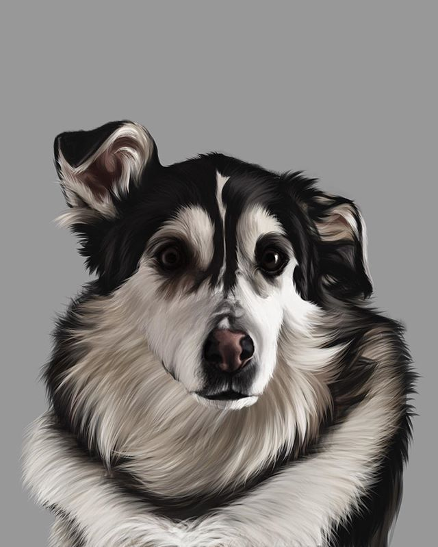 Another pet portrait done and delivered! This is Shylo and she was so fun to capture! She's a husky/kangaroo mix and according to her owner is quite the mouthy dog... imagine being able to argue with your pup! My favorite thing is her floppy ear 😍 I'll post a progress video next so you can see the whole process of drawing Shylo! 🐶 . I'm accepting commissions to get your own pup drawn and it makes for such a thoughtful gift for any pet owner! Head on over to my website (link in profile) for more info!