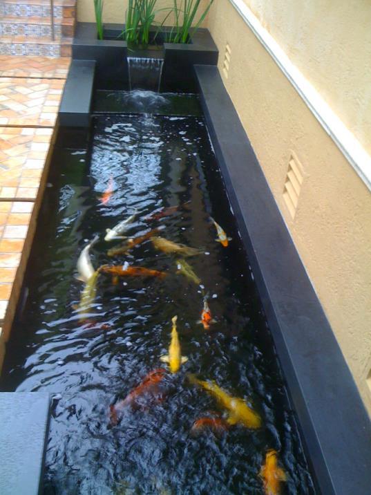 Pond_pics_029_op_537x716.jpg