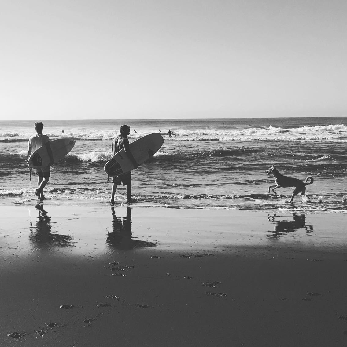 Beach Surf Waves