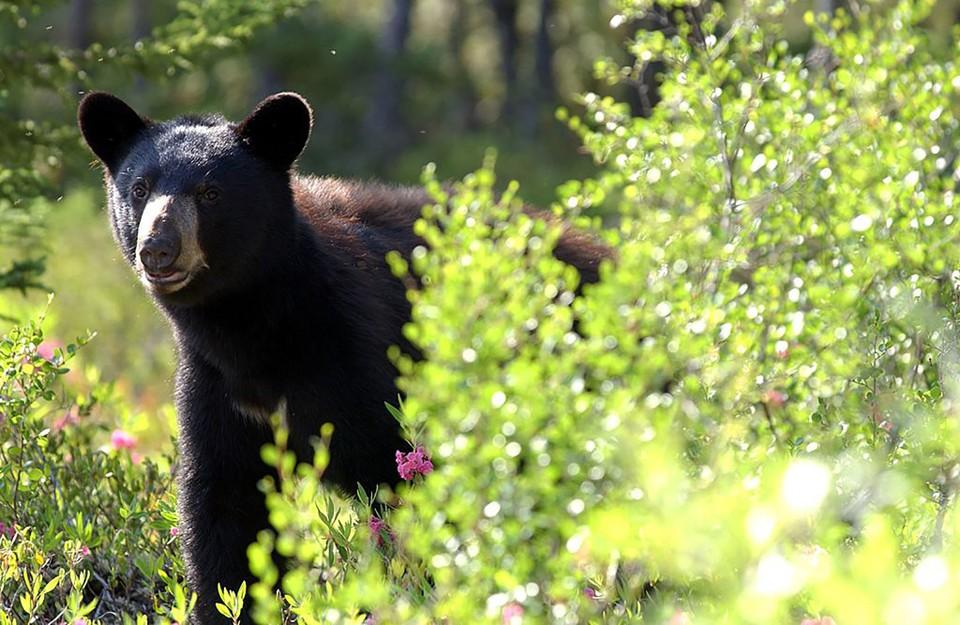 bear-20-ajpg-dad1c9848adeadbb.jpg