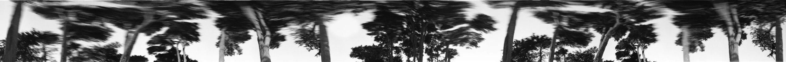 Timeline_trees.jpg