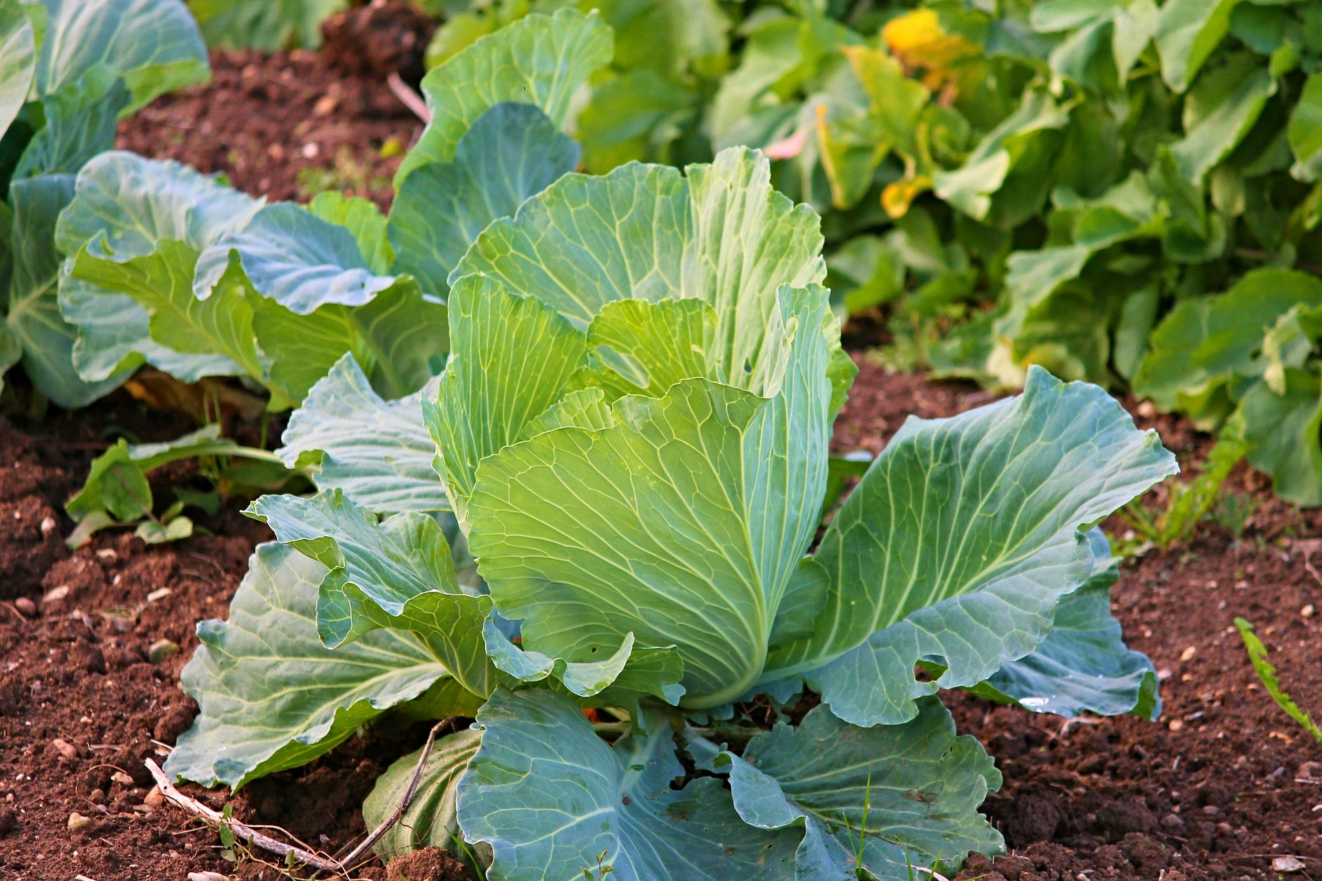 Growing-Vegetables-Garden.jpg