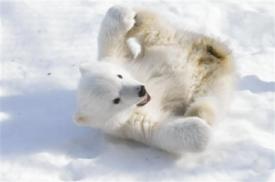 polar-bear-cub.jpg