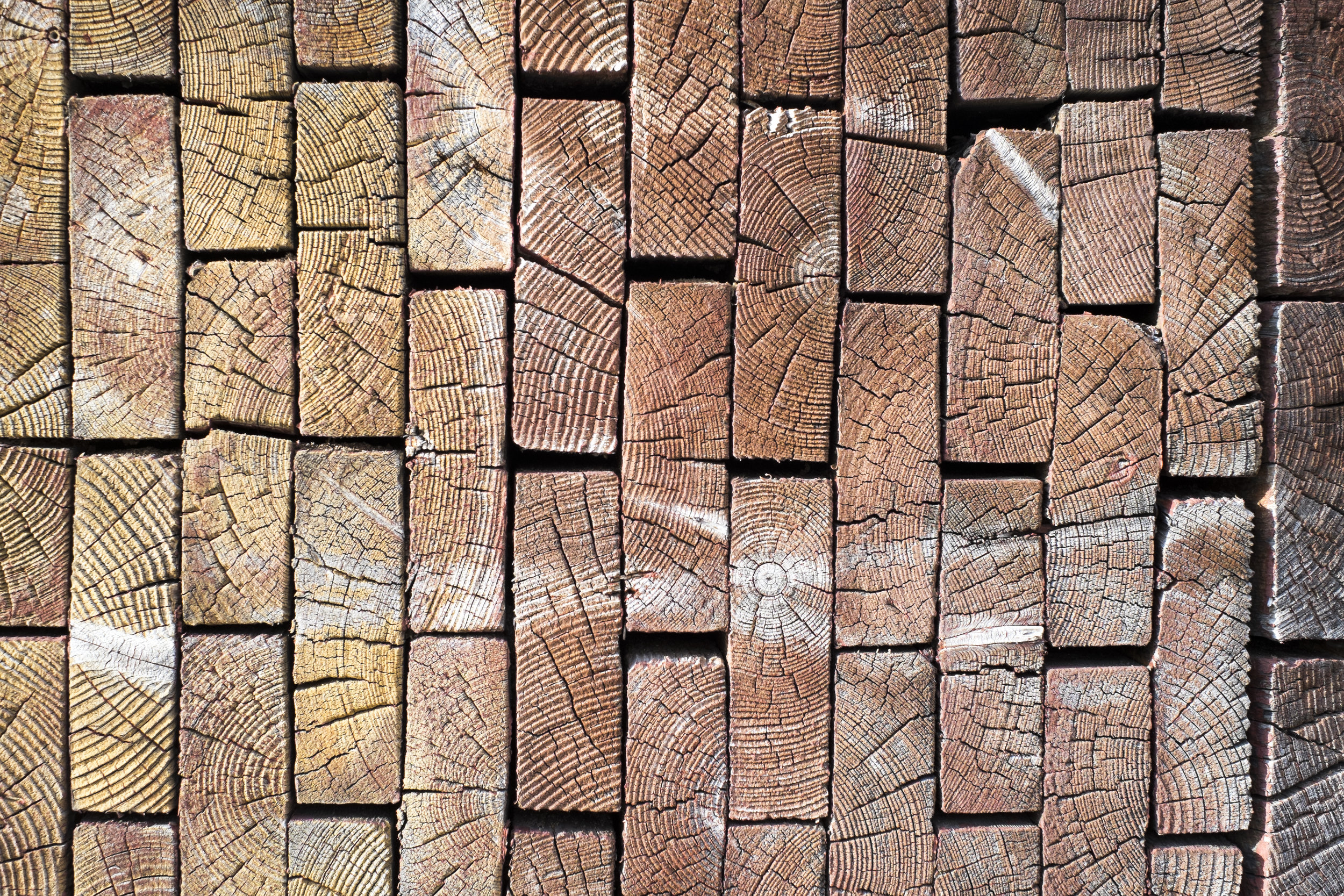 A quick guide to termites and timber pests - For residential and commercial property