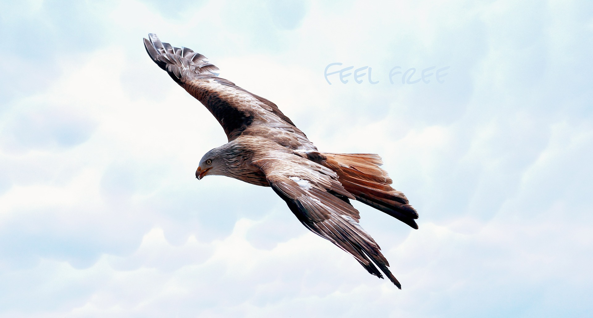 Bird Freedome.jpg