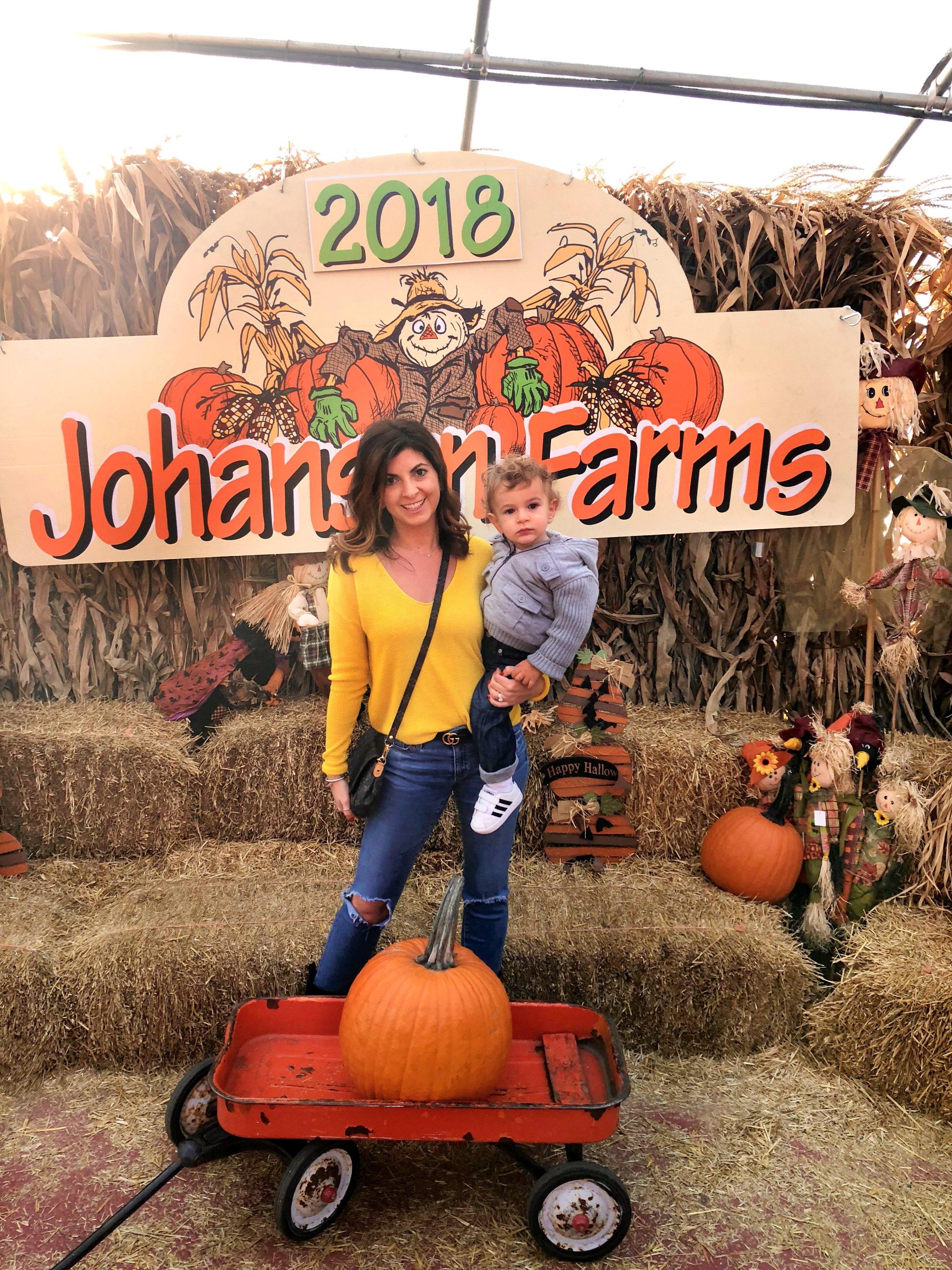 siamia pumpkin patch.JPG