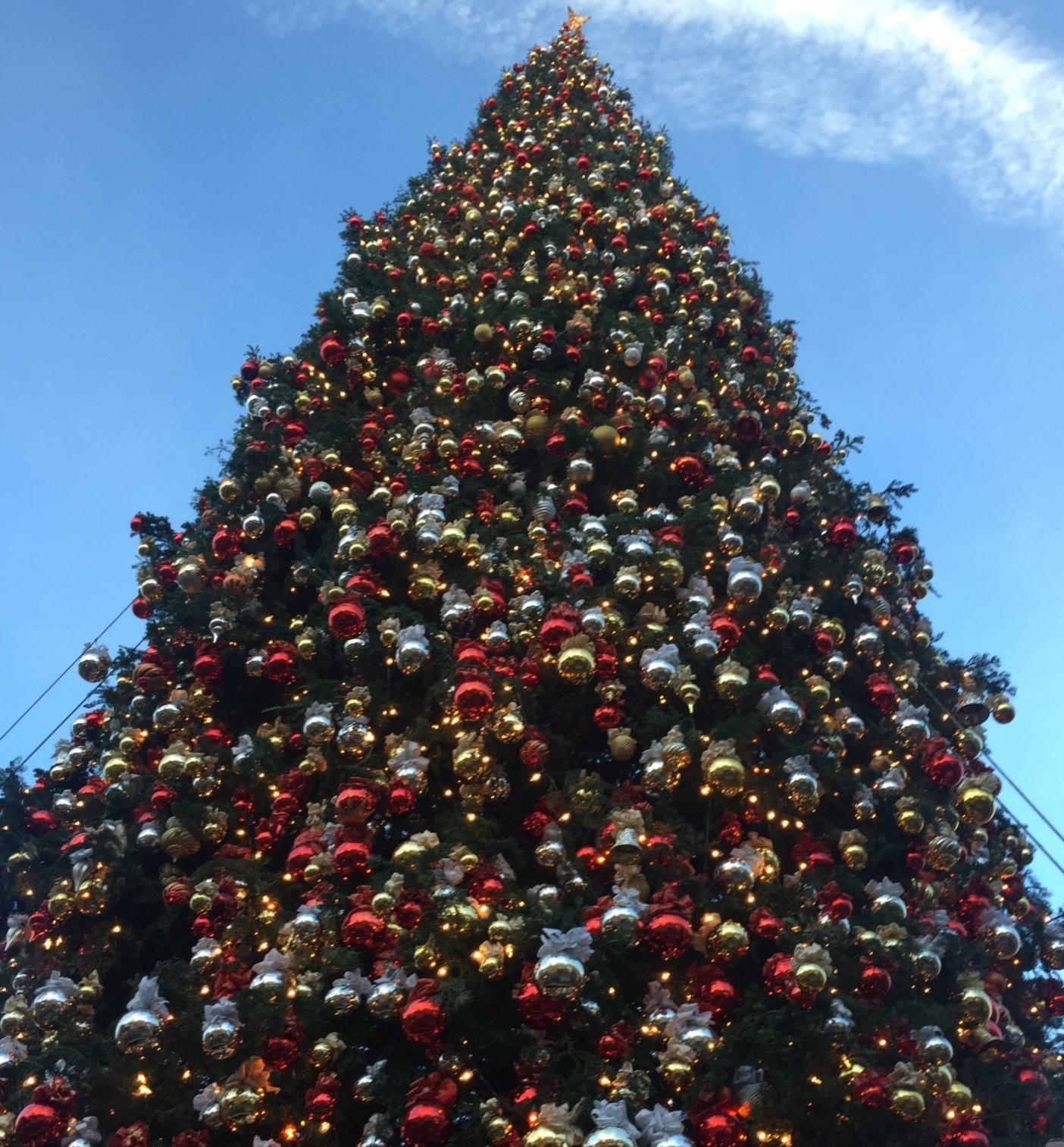 Christmas Tree - Glendale