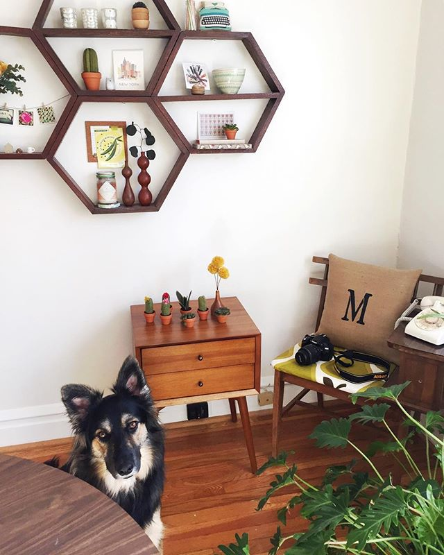 A little throwback to set supervisor @kaldithedog and what our photo shoots looked like before we enlisted @feedme_withamanda and her mad photography skills. 📸 #thehappyhouseplant