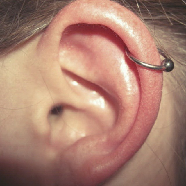 Cartilage $45.jpg