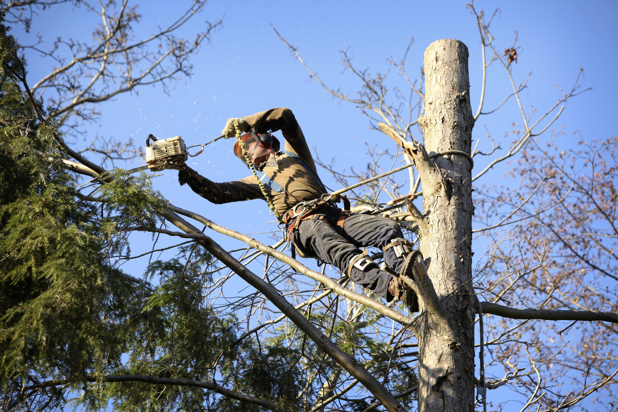 Tree Maintenance & Tree Felling - Crown reductions, crown lifting, dead wooding & site clearances.
