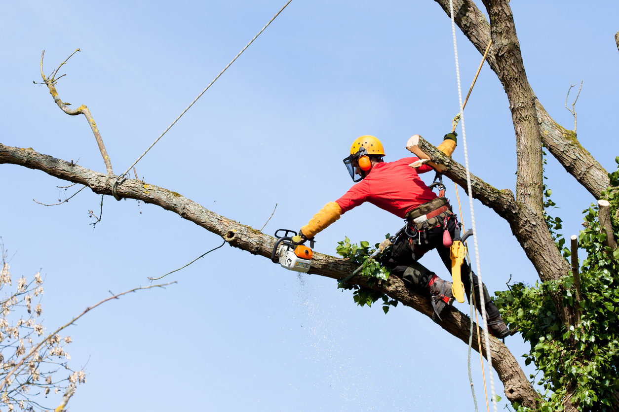 Trained Professionals - Our Tree Surgeons are City & Guilds NPTC qualified with years of experience.