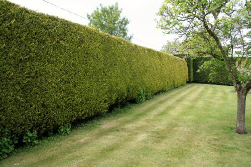 hedge cutting aldwick.jpg