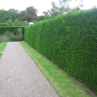 hedge trimming rose green.jpg