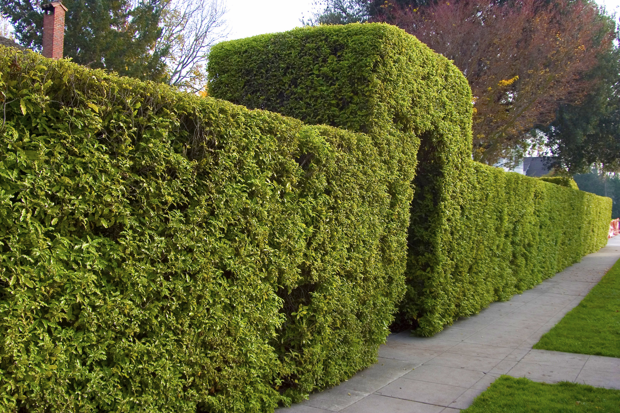hedge trimming itchenor.jpg