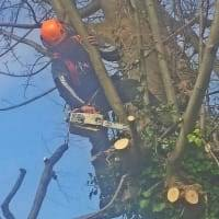tree removal chichester.jpeg