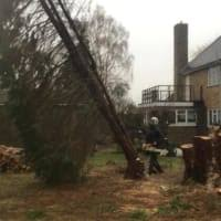 tree services chichester.jpeg