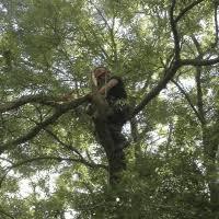 tree surgery chichester.jpeg
