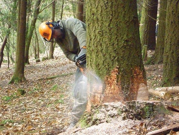 tree-felling chichester.jpg