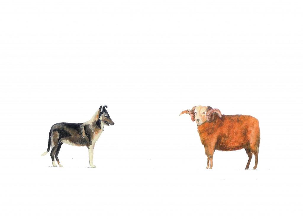 ram-and-sheepdog1-1024x739.jpg