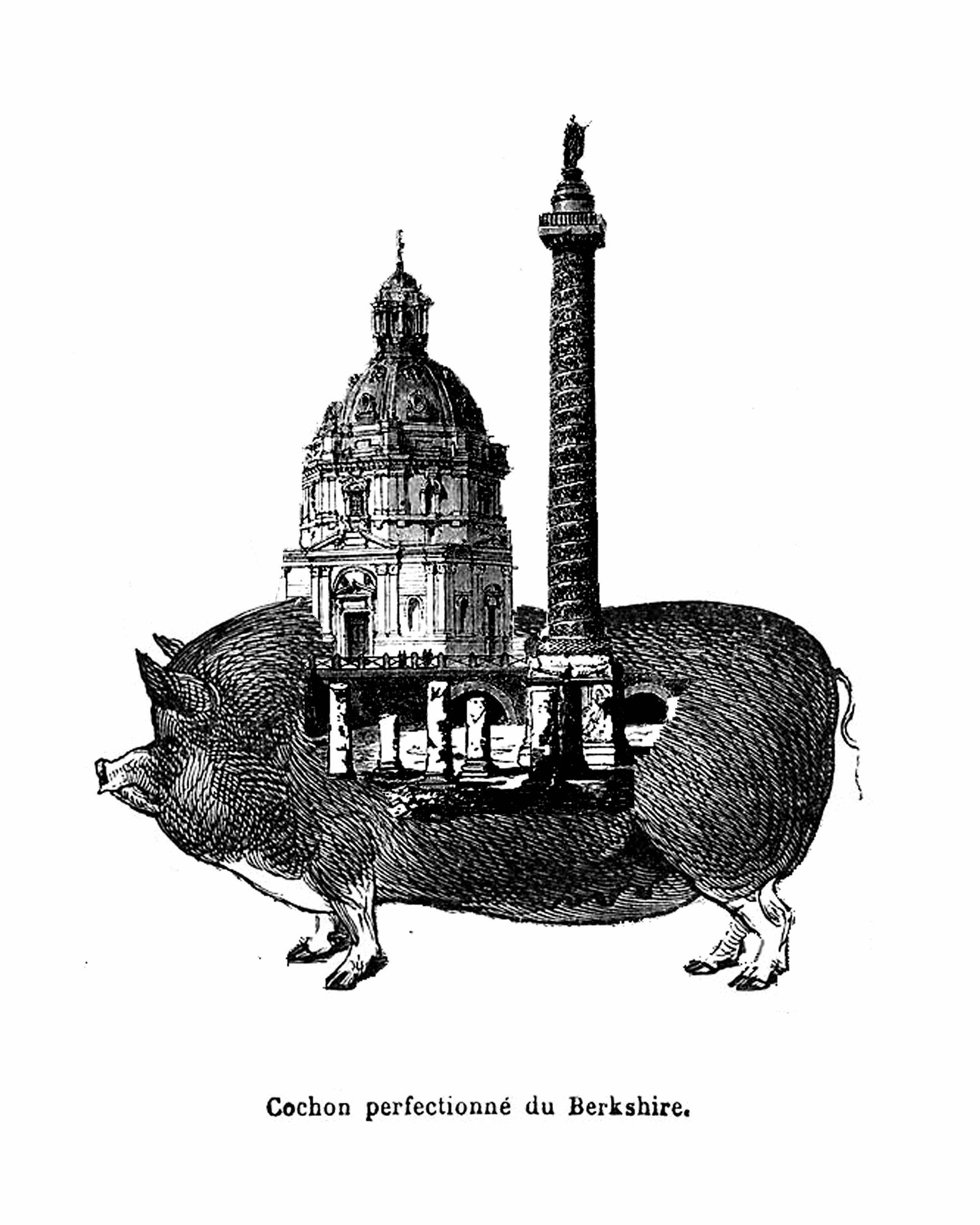berkshire-pig.jpg