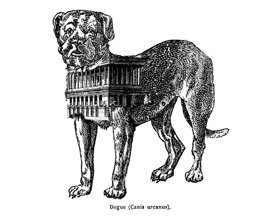 mastiff-website.jpg