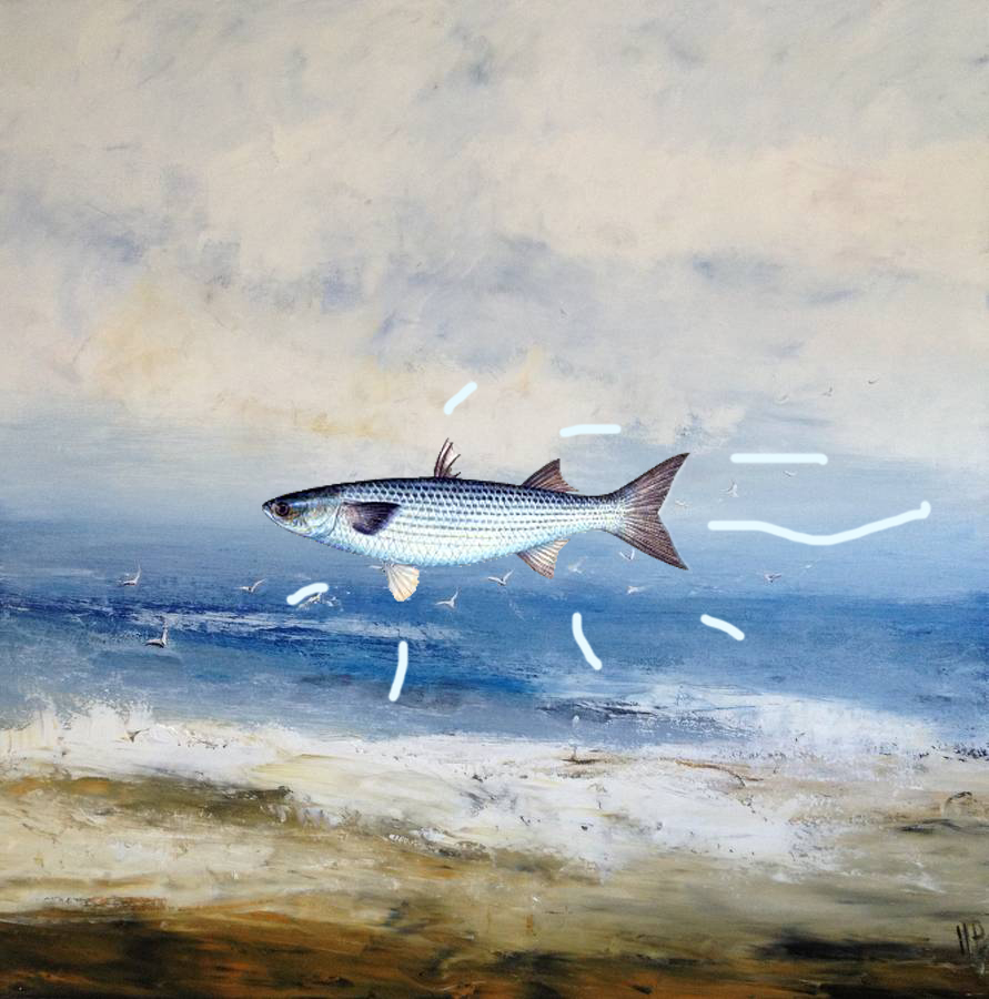 'Leaping Mullet'