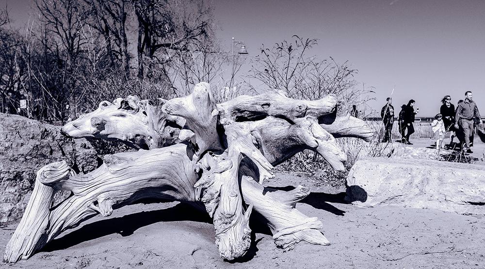 Driftwood-Apr21-18B.png