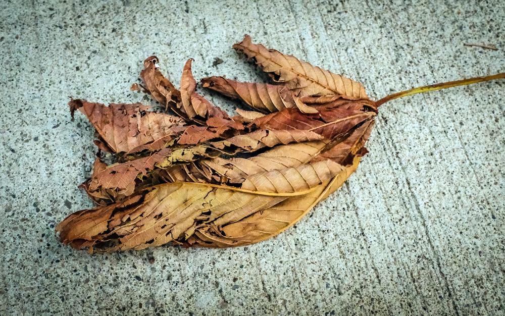 Leaf-Connie-Jul21-18.png