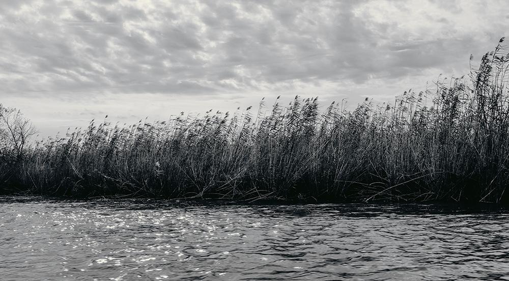 Wetlands-Dec26-18.png