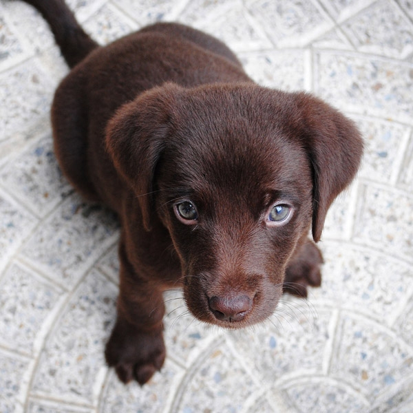 Taking Care of Pets When Kitchen Remodeling